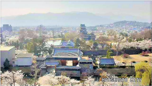 松本城桜のライブカメラ