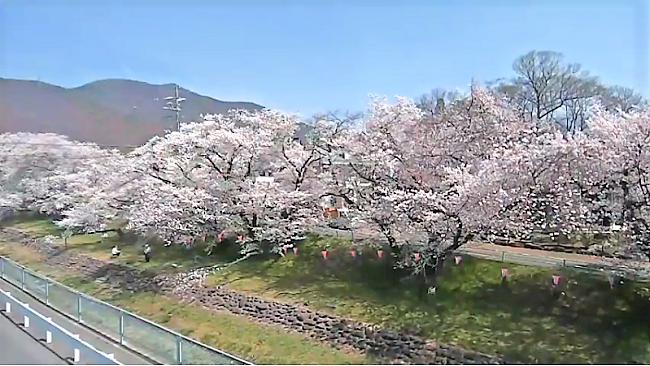 新田公園のライブカメラ2