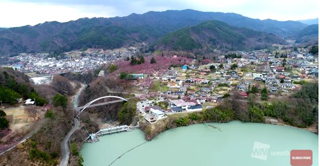 高遠桜ライブカメラ2