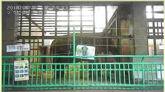 茶臼山動物園ゾウ