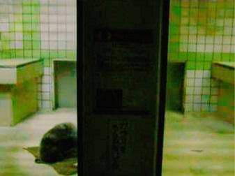 茶臼山動物園ライチョウ